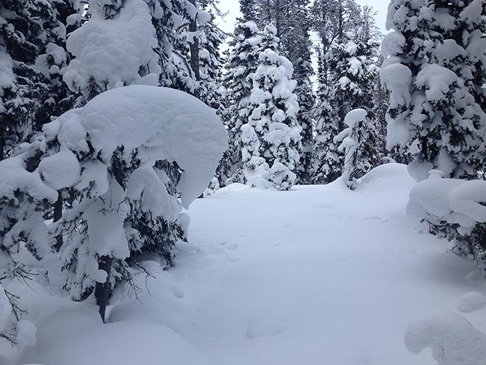 snow_scape.jpg