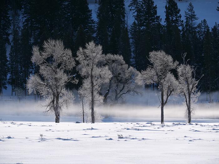 frosty_trees.jpg