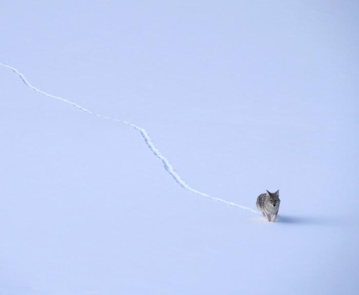 feb19_coyote.jpg