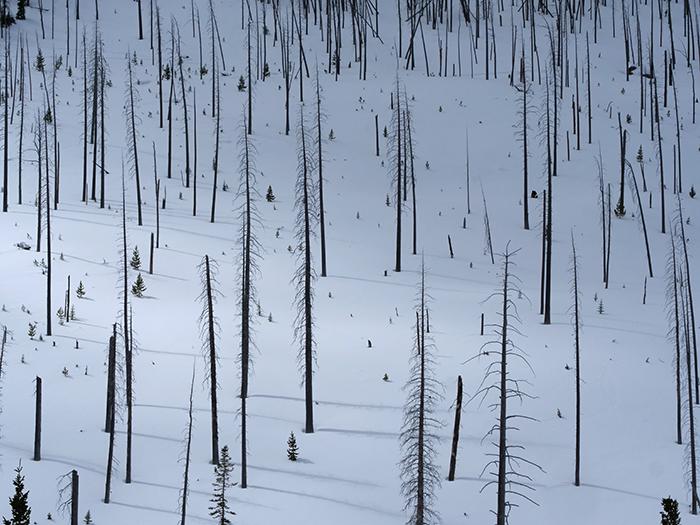 snowboarding_the burn.jpg
