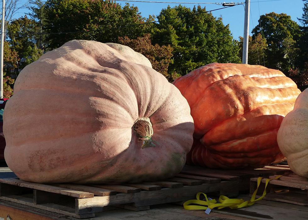 Monster Pumpkin Festival via site