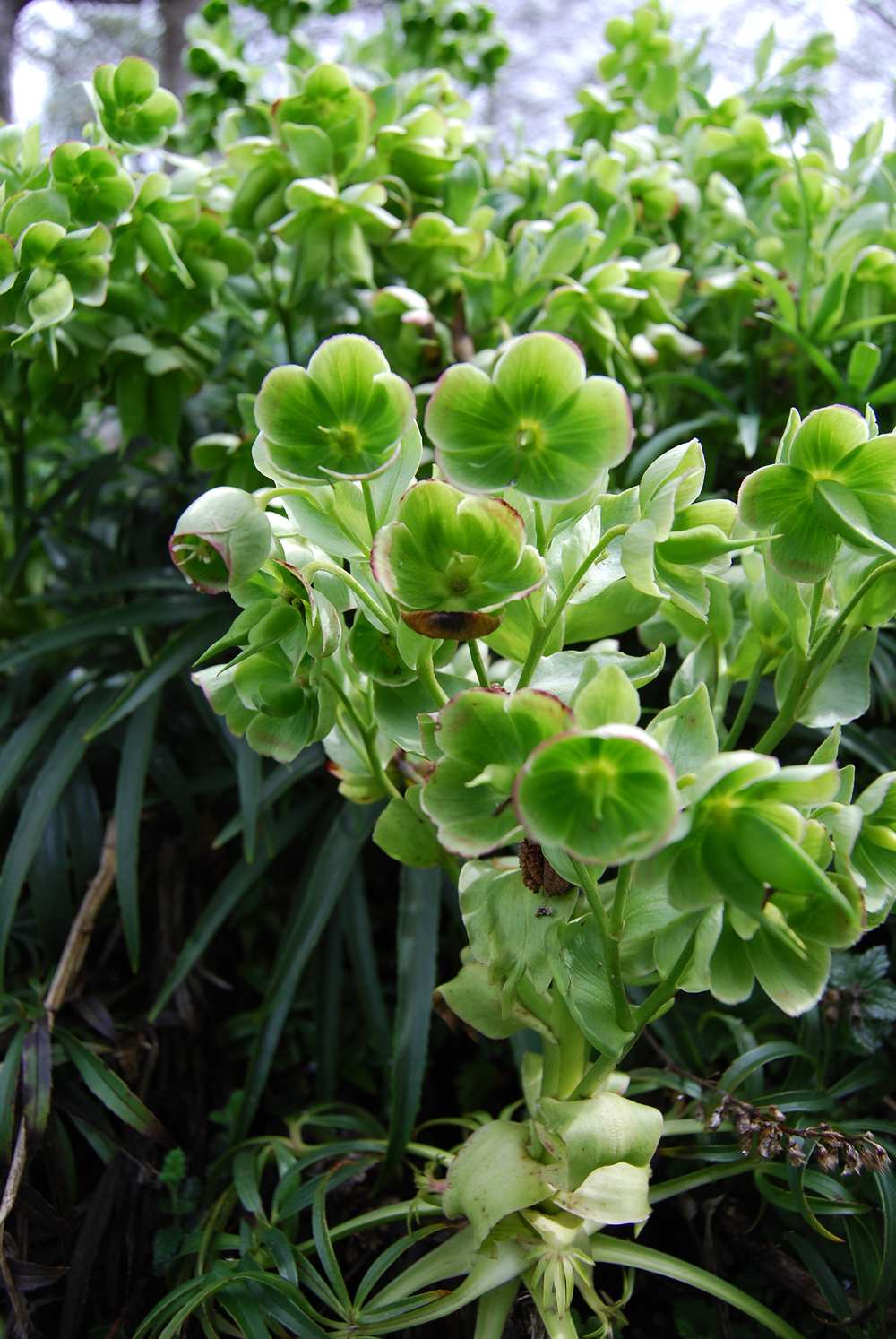 botanic_adventure_21.jpg