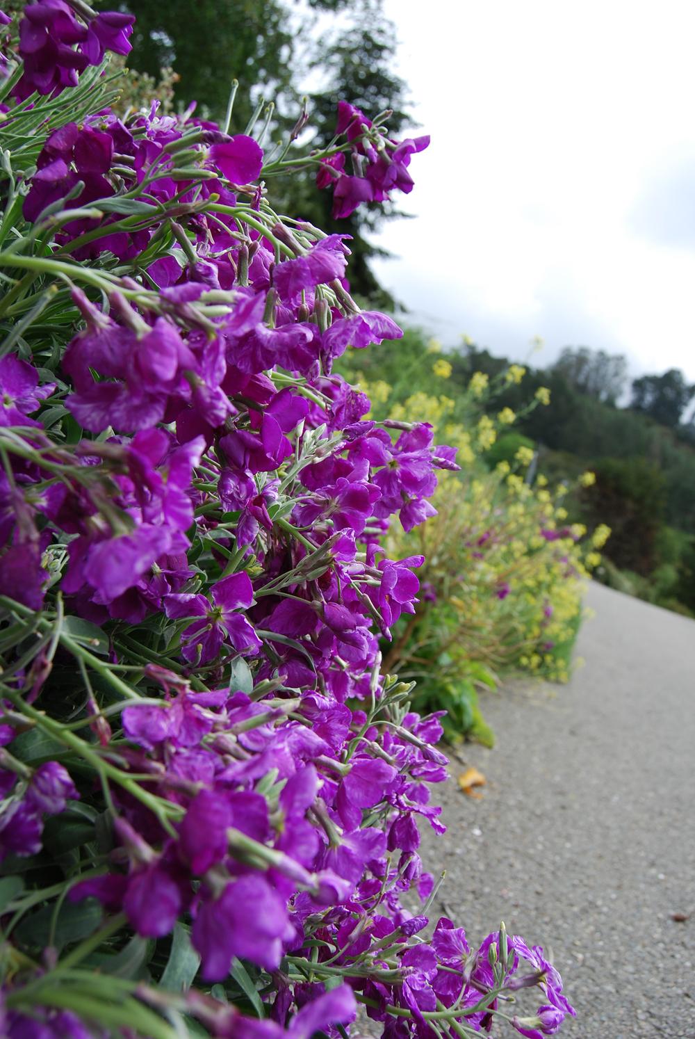 botanic_adventure_24.jpg