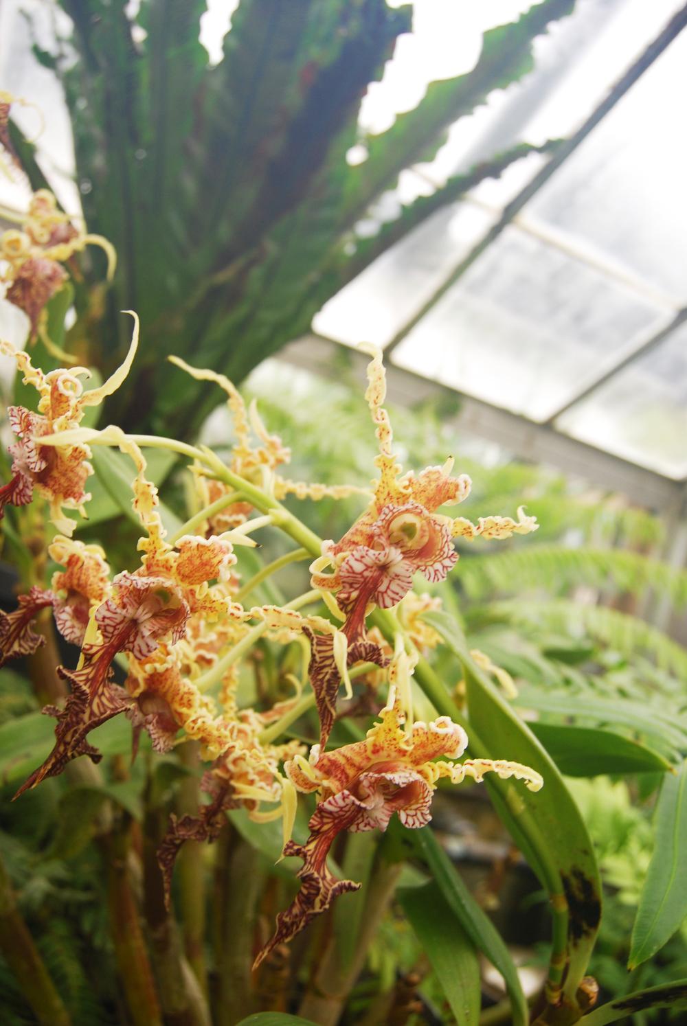 botanic_adventure_26.jpg