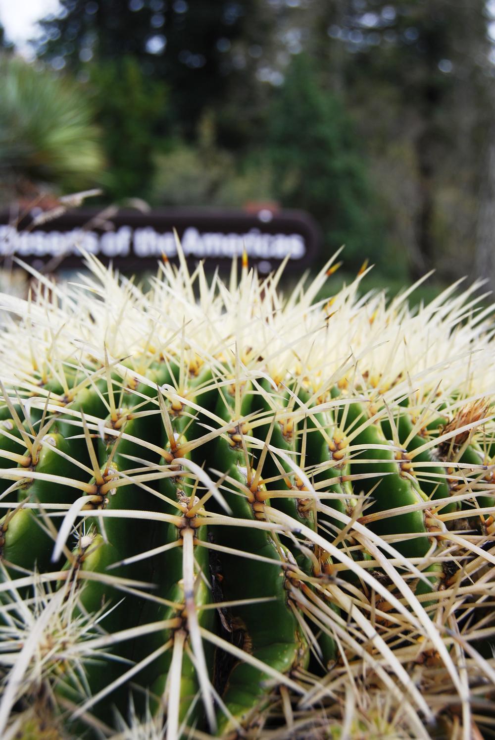 botanic_adventure_17.jpg