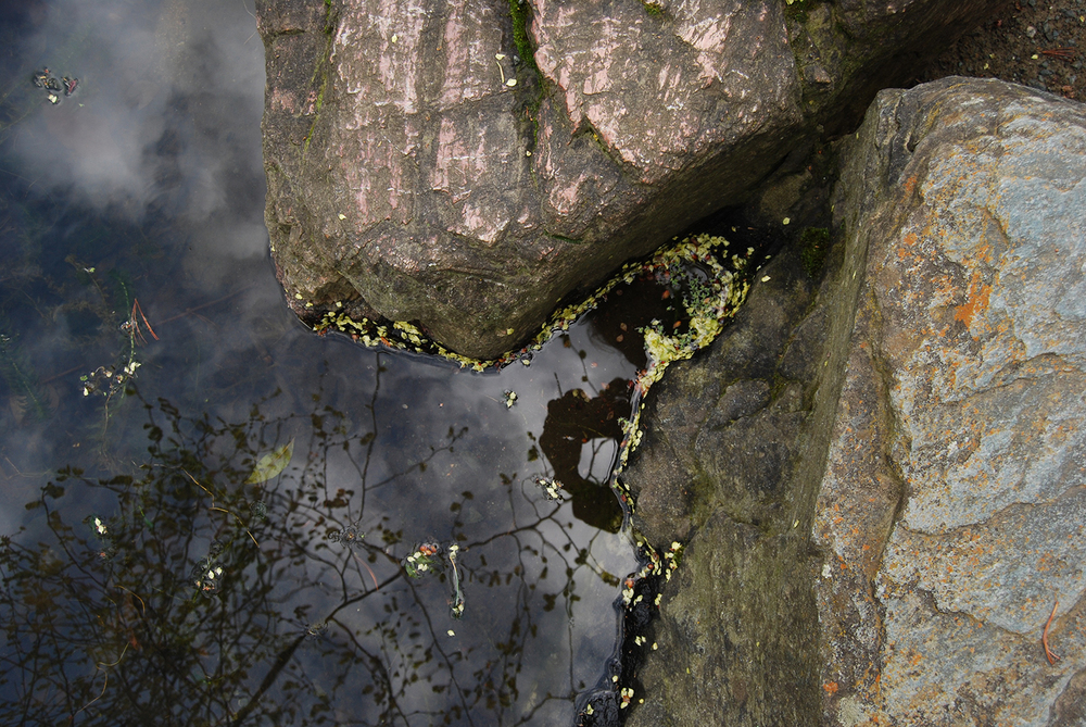 botanic_adventures_16.jpg