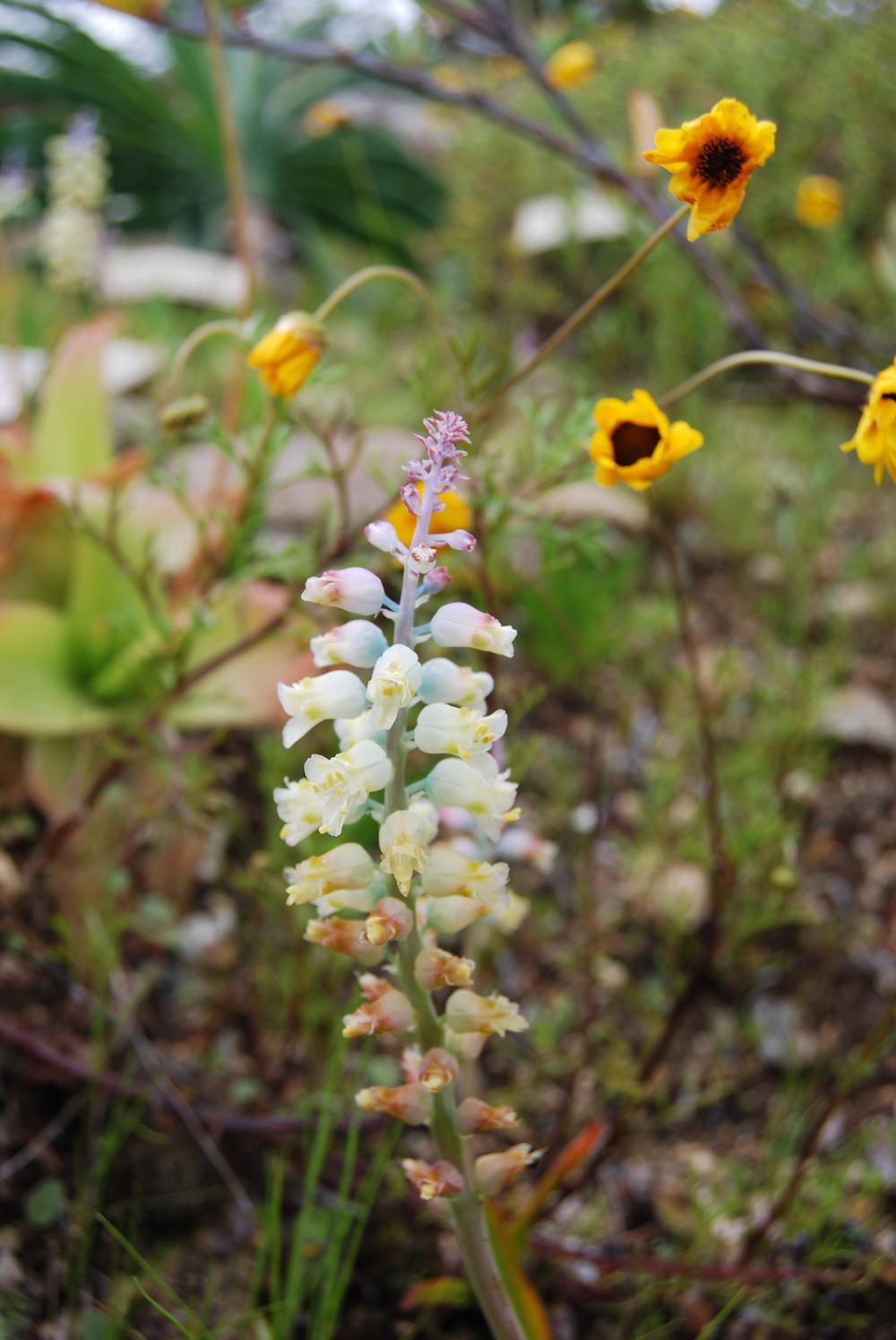 botanica_adventure_20.jpg