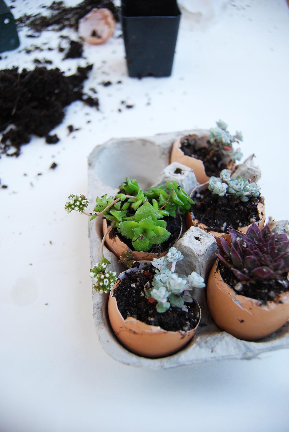 succulent_egg_cups_5.jpg