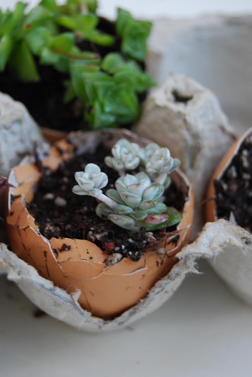 succulent_egg_cups_6.jpg