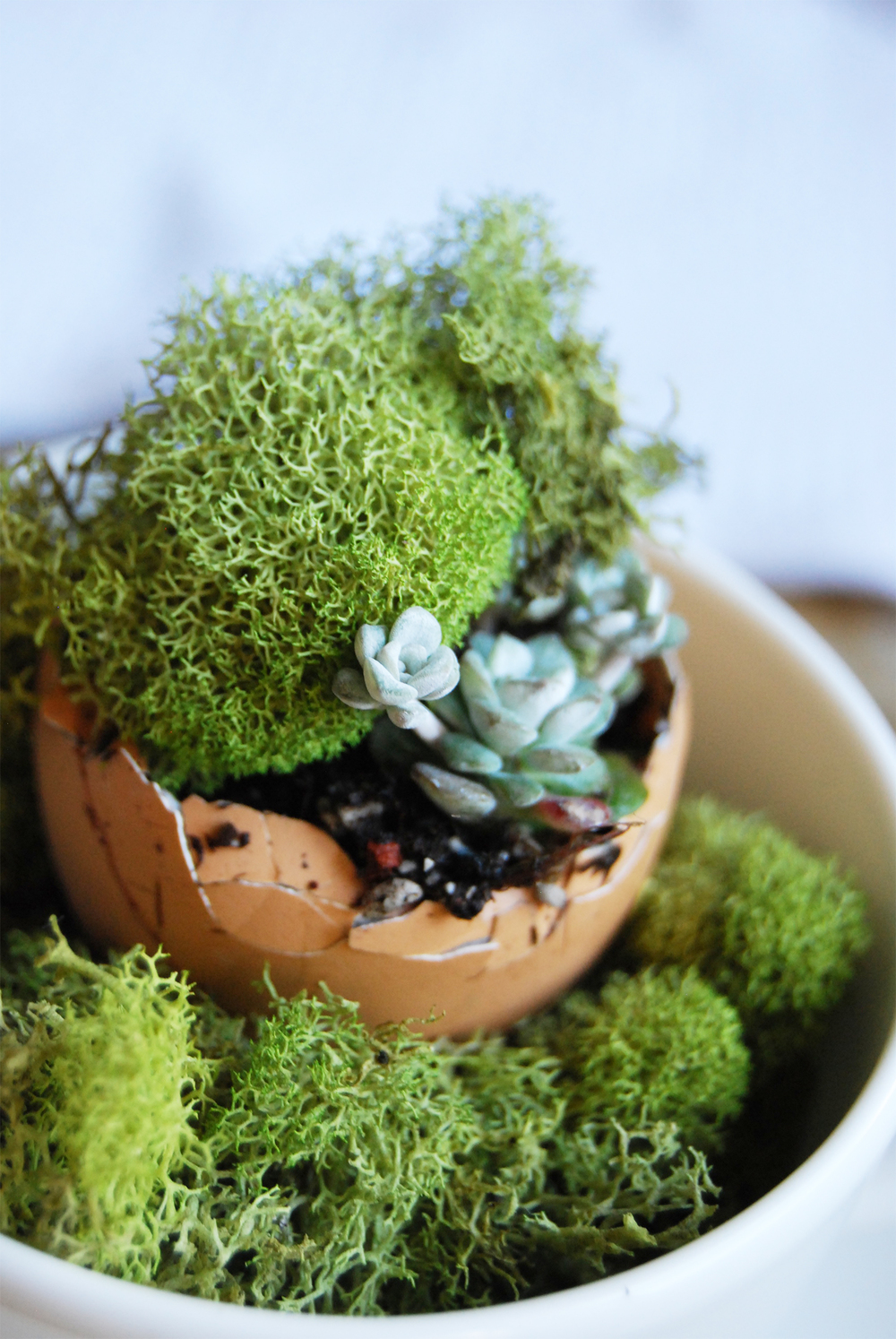 succulent_egg_cups_8'.jpg