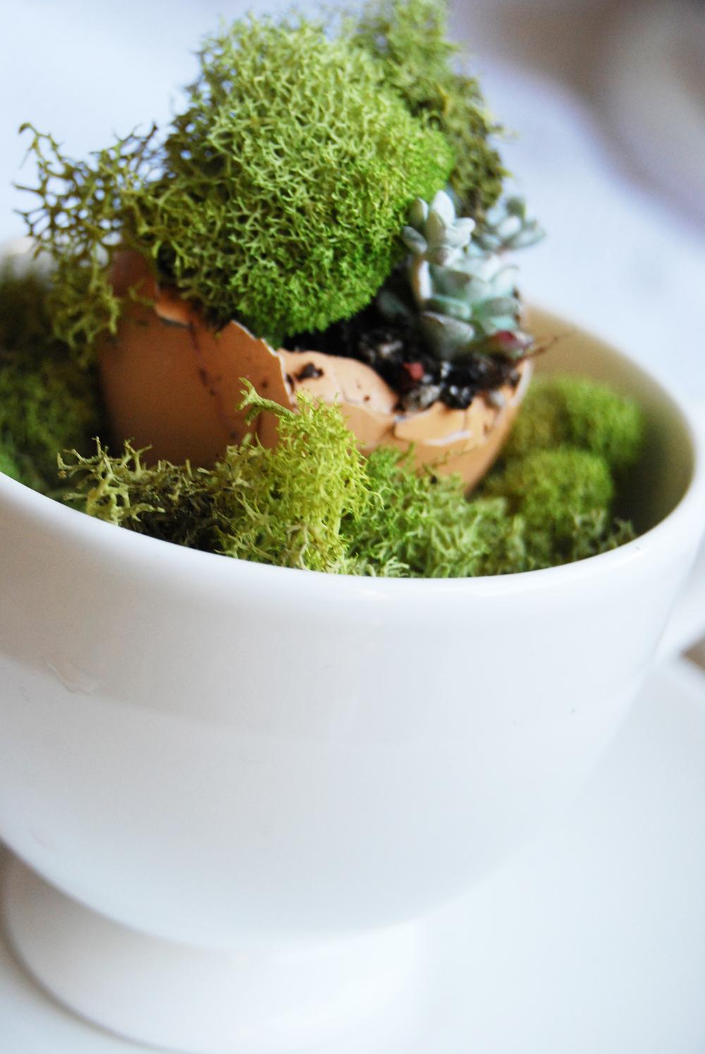 succulent_egg_cups_13.jpg