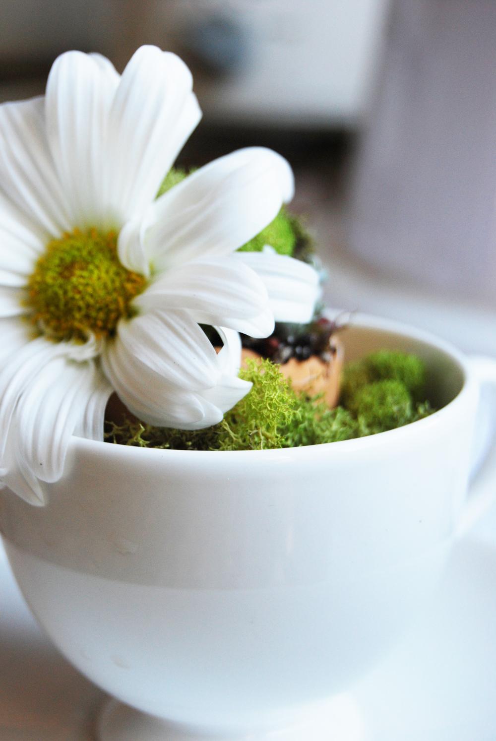 succulent_egg_cups_14.jpg