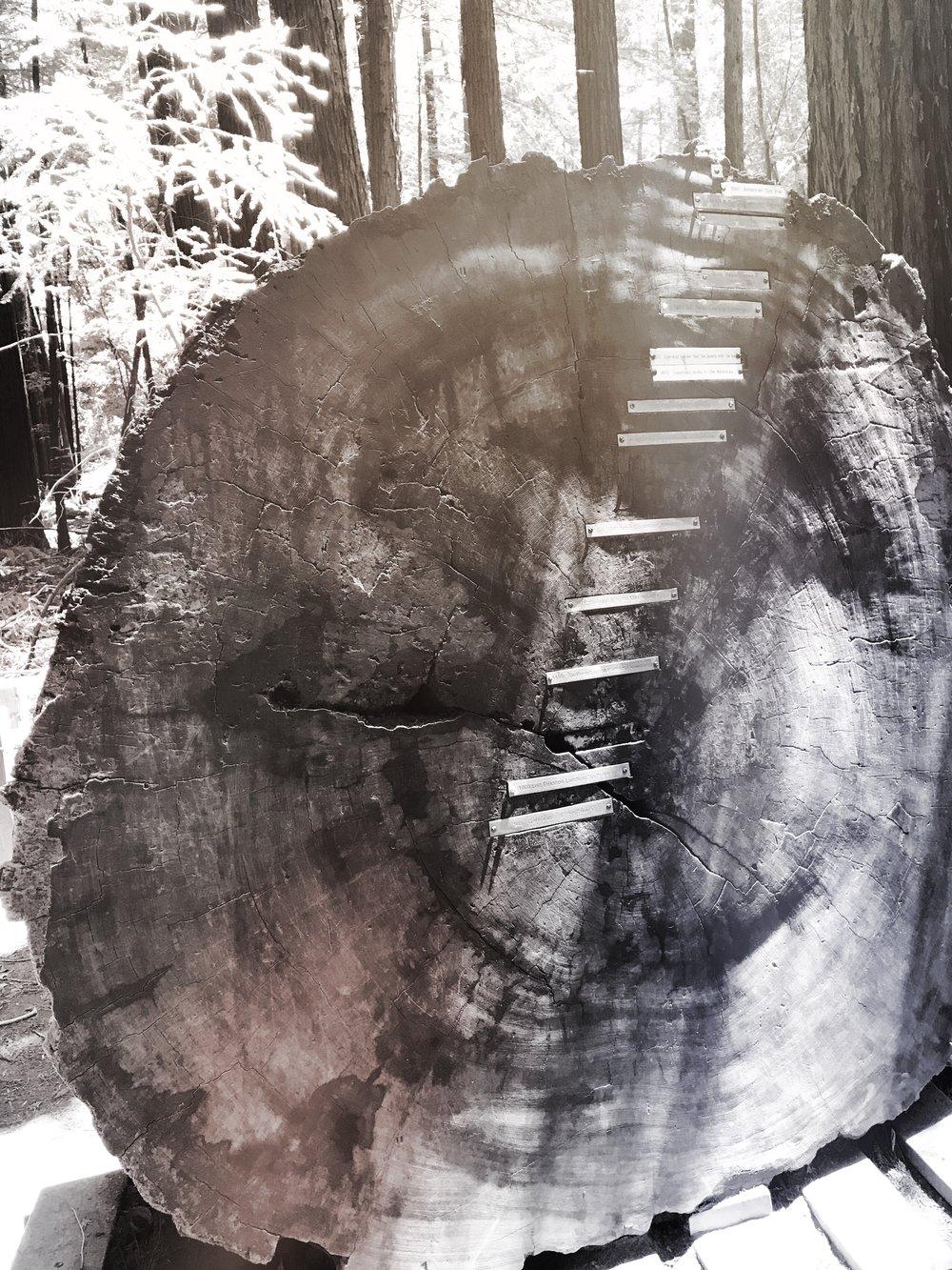 titan_trees_4.JPG