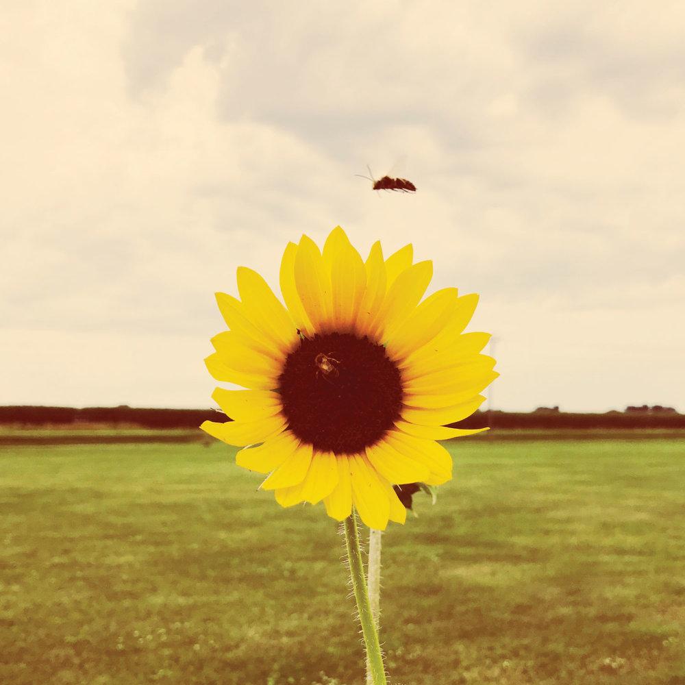 oh_hey_summer_photo.jpg