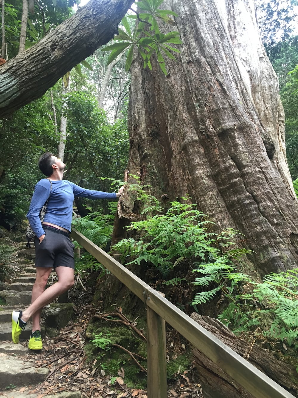 A gorgeous walk up mount Wellington, through ferns, moss and massive trees. My model is 6 ft 5, so you can see that these trees are huge!!