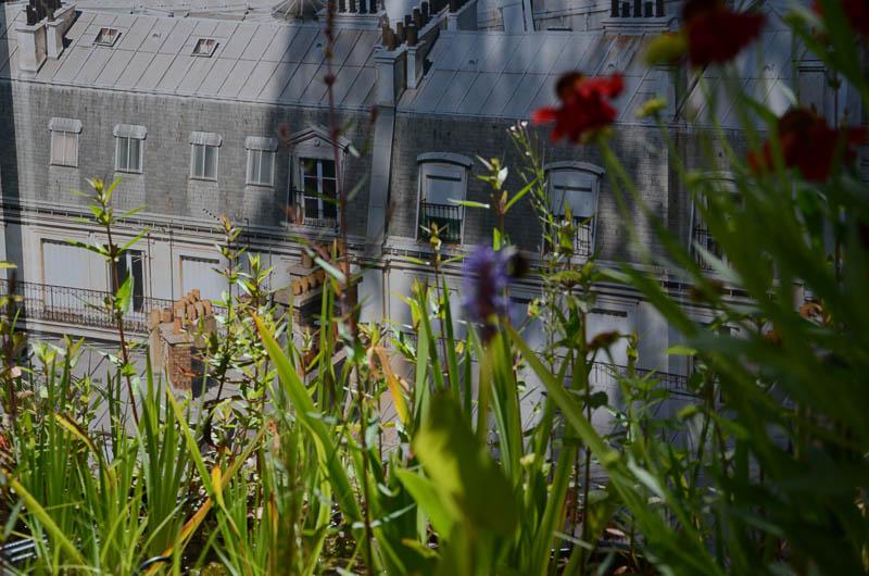 chaumont-3179.jpg