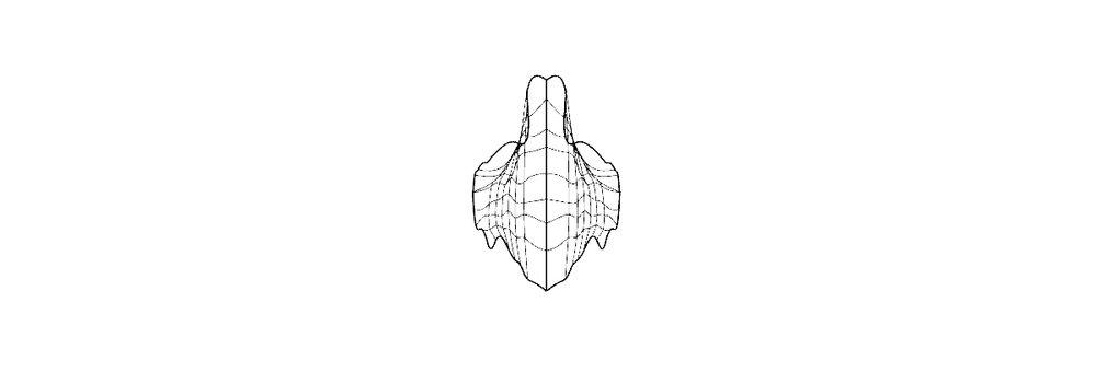 neklesa shark sketch 2.jpg