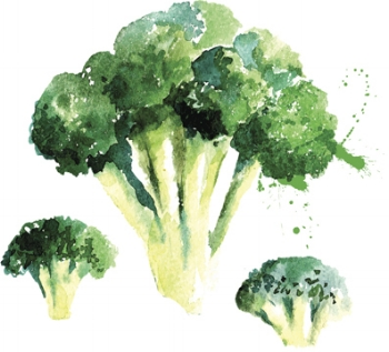 Broccoli is rich in dietary fibre which feeds a healthy gut ecology. A varied diet rich in different plant foods - ideally unprocessed and where possible, organic - is the most natural way of supporting healthy, happy gut. However, sometimes a condition or reduced digestive capacity may call for a momentary reduction in dietary fibre. To ensure your diet is suitable as an individual, don't hesitate to work with an qualified, registered nutritional therapist.