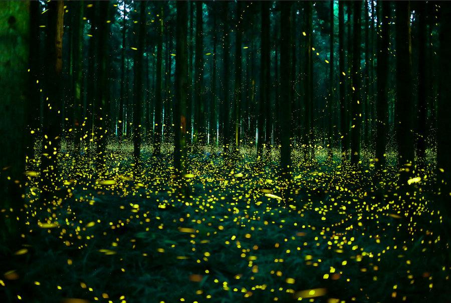 fireflys 2.jpg