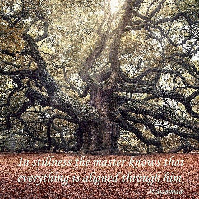 stillness mster knows .png