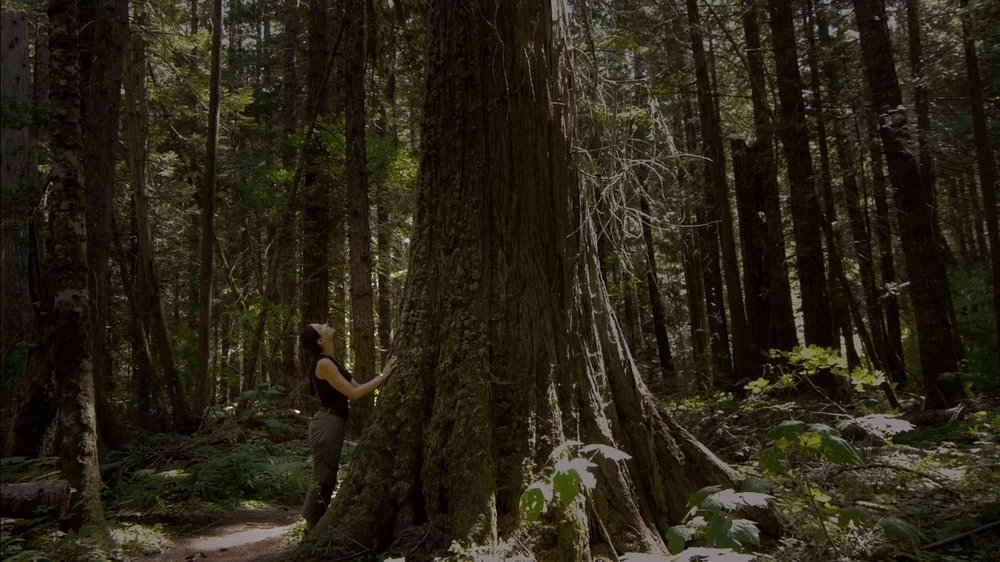 Intelligent Trees Trees talk, know family ties, and care for their young. Is this too fantastic to be true? A stunning look at the language of trees. Directed by Julia Dordel and Guido Tölke. 2016 (45 mins)