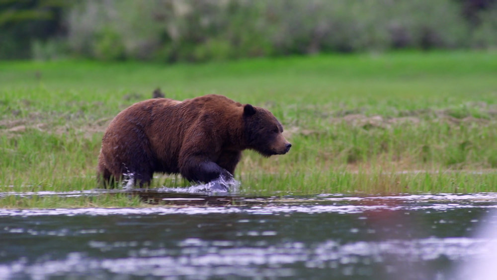 grizzlywater-credit-tom-rivest.jpg