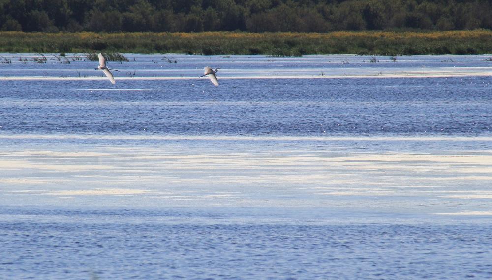 Zeloski Marsh