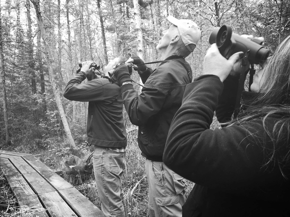 Birding can be a fantastic way to meet like-minded folks, spend time outdoors, and learn about our beautiful natural world. Photo by Emily Meier