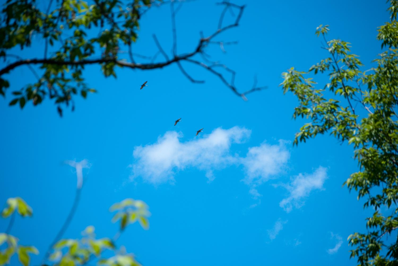 Sandhill Cranes Study Lake Wingra As >> Go Birding Madison Audubon