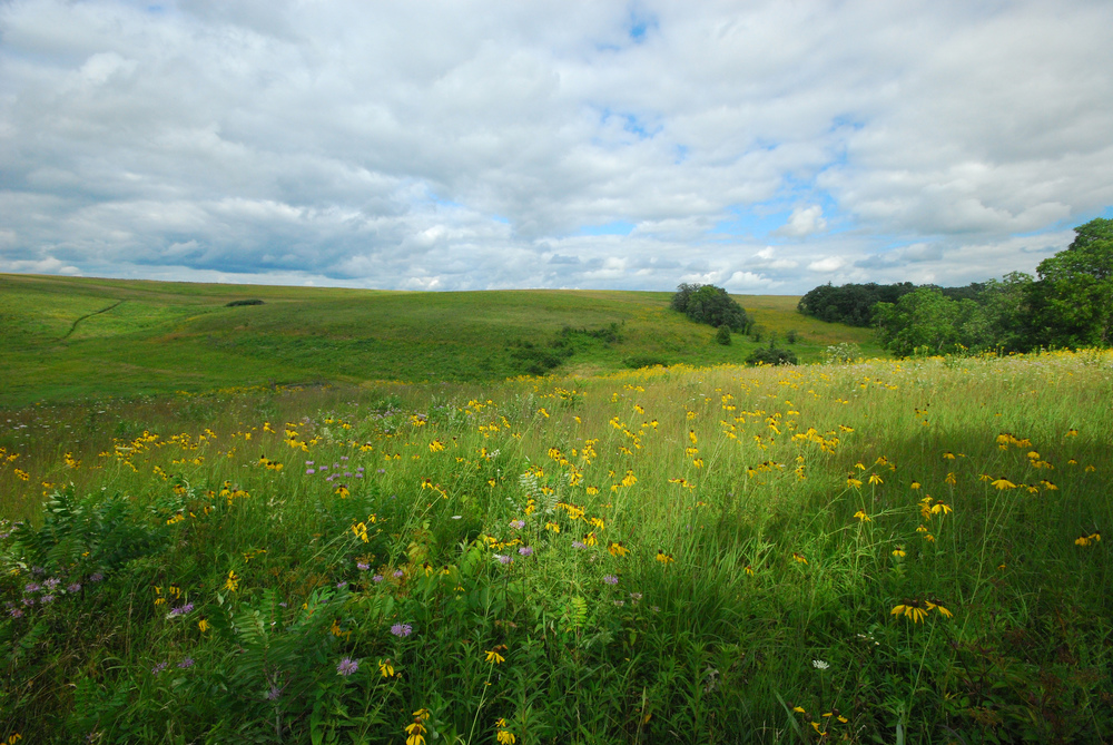 Schurch-Thomson Prairie, owned and managed by The Prairie Enthusiasts.  Photo by Joshua Mayer