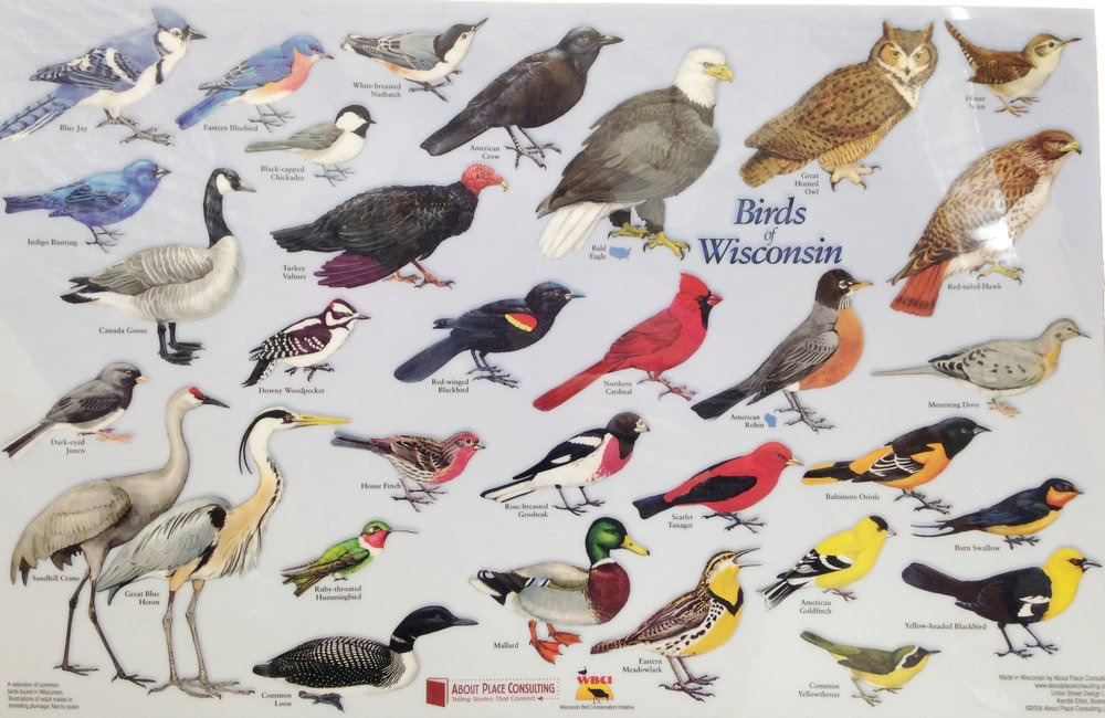 birds of wisconsin placemats batch of 10 madison audubon