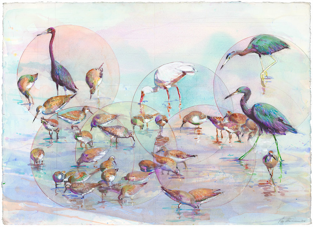 An example of the incredible artwork done at the Field Museum Bird Lab by Peggy Macnamara.