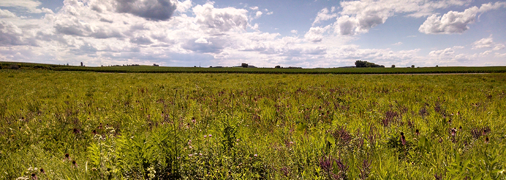 Jill's Prairie at Madison Audubon's Goose Pond Sanctuary