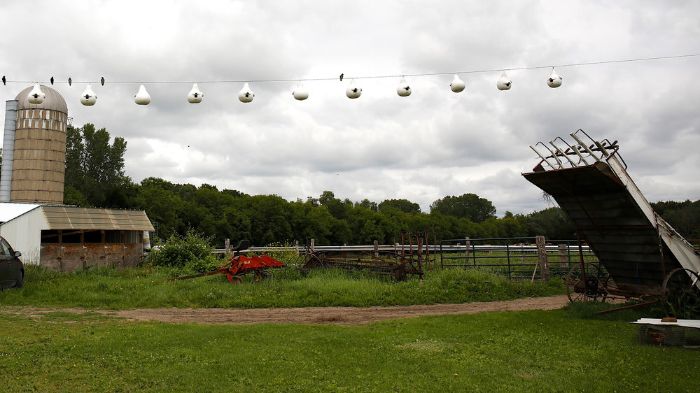 One of the Amish farms hosting gourds for purple martin nesting. Photo by Arlene Koziol.