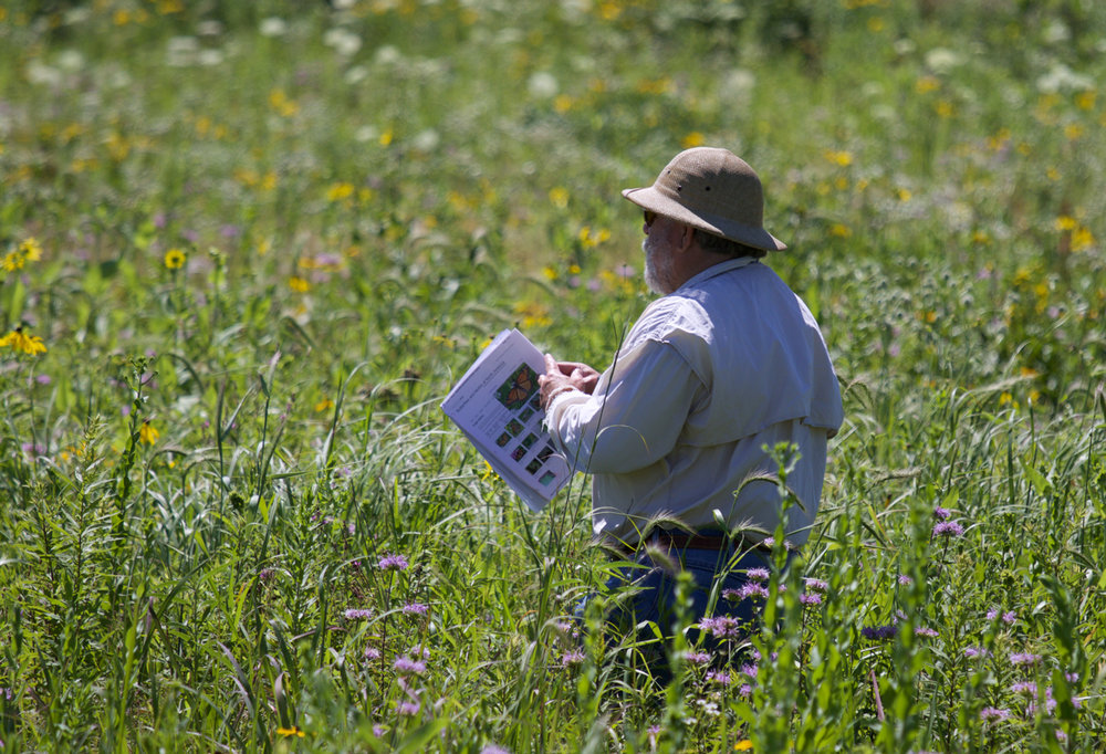 Goose Pond volunteer and Madison Audubon board member Topf Wells with butterfly guide in hand checking out a sighting. Photo by Arlene Koziol