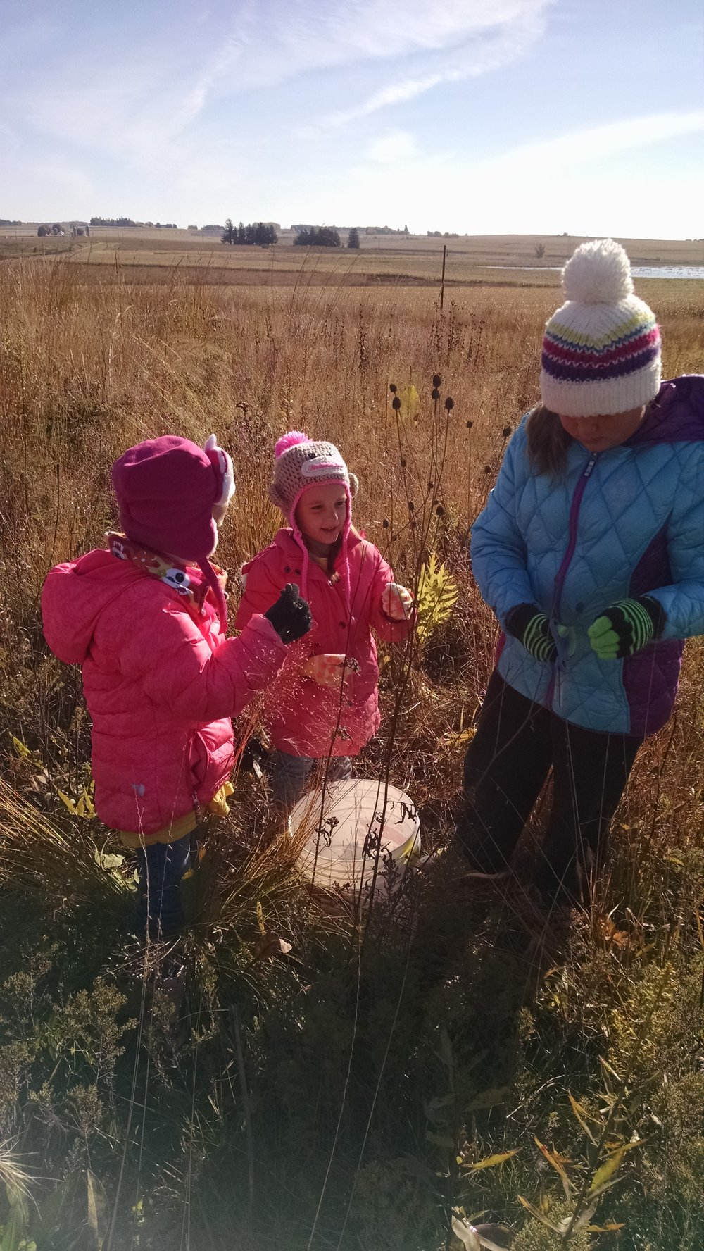 Children help collect seeds to help create prairie habitats close to home.