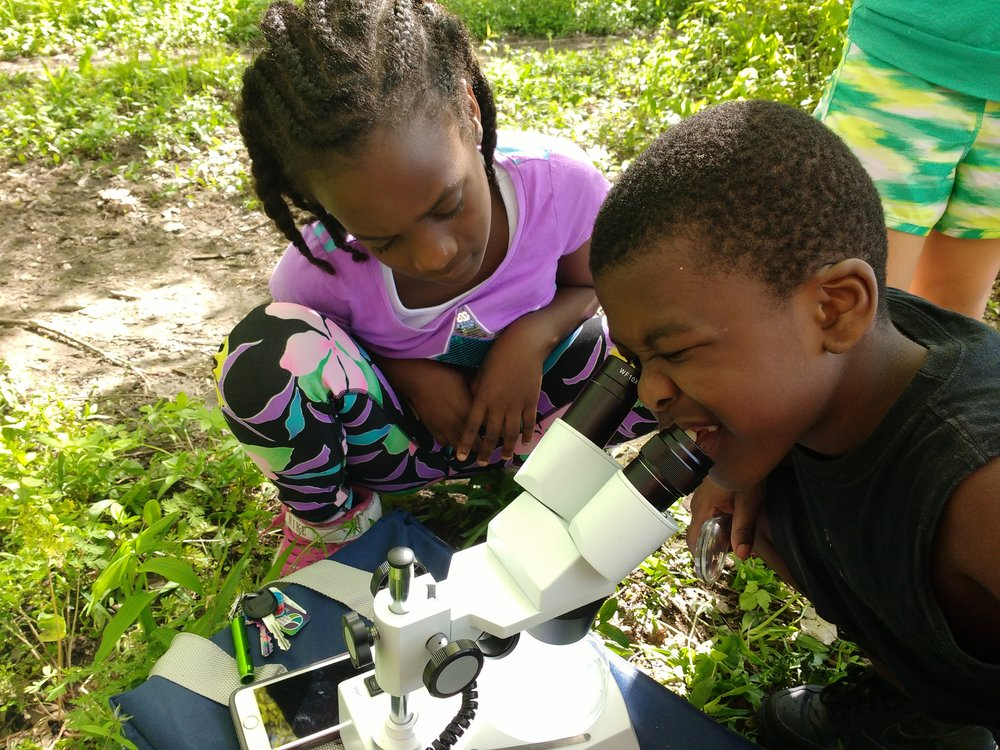 Vera Court kids grow their science skills while searching for water critters.