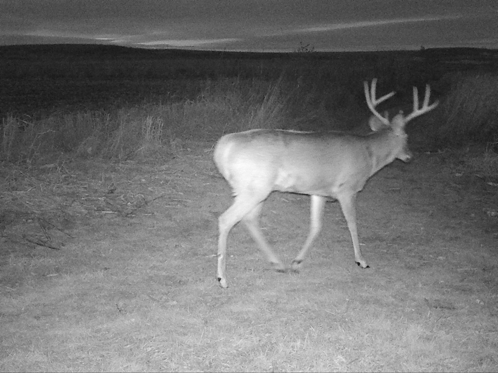 A buck hits the trail at 4:48pm on November 26, 2017... three minutes after the close of the gun deer season.