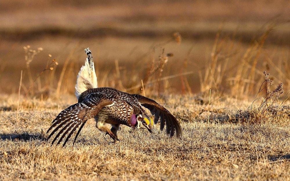 Photo by UW FWS Mountain-Prairie