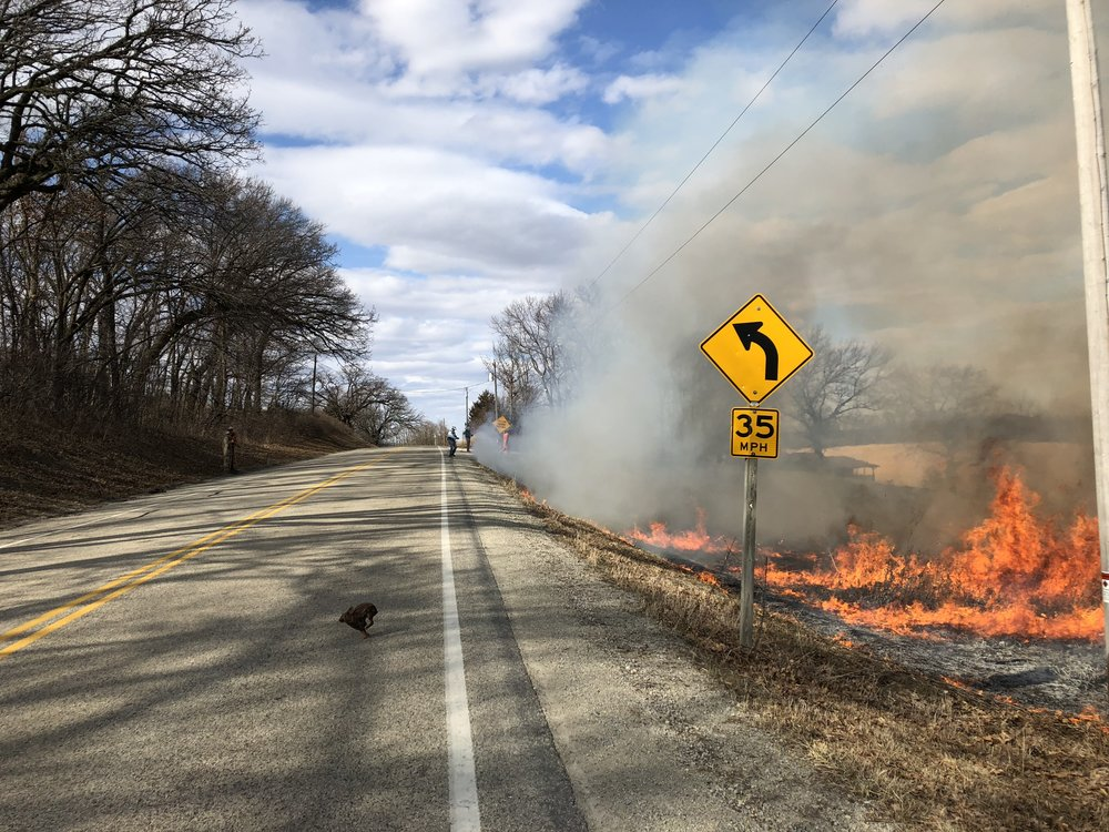 A rabbit escapes the burn at Faville Grove. Note the smoke control off the road. Photo by Drew Harry