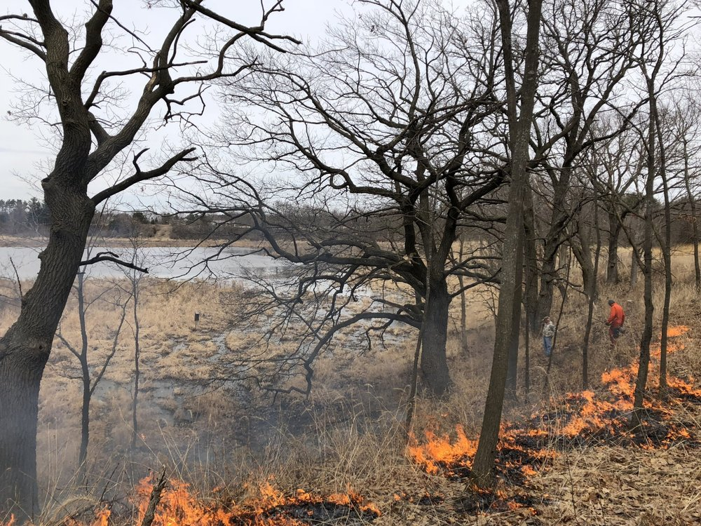 Burning the savanna around the kettle pond. Photo by Drew Harry