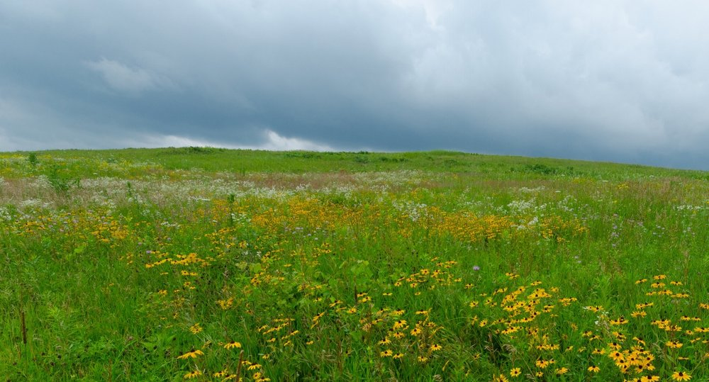 This is what some grassland birds want: prairie as far as the eye can see. Photo by Joshua Mayer