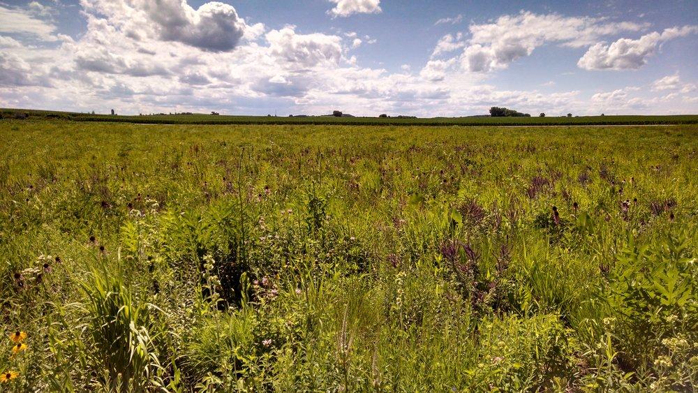 Jill's Prairie