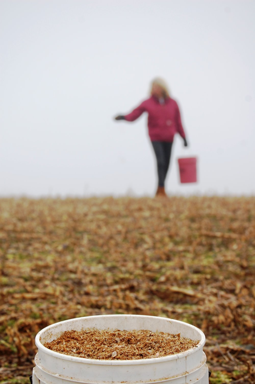 Faville Prairie Planting - Matt Reetz.jpg