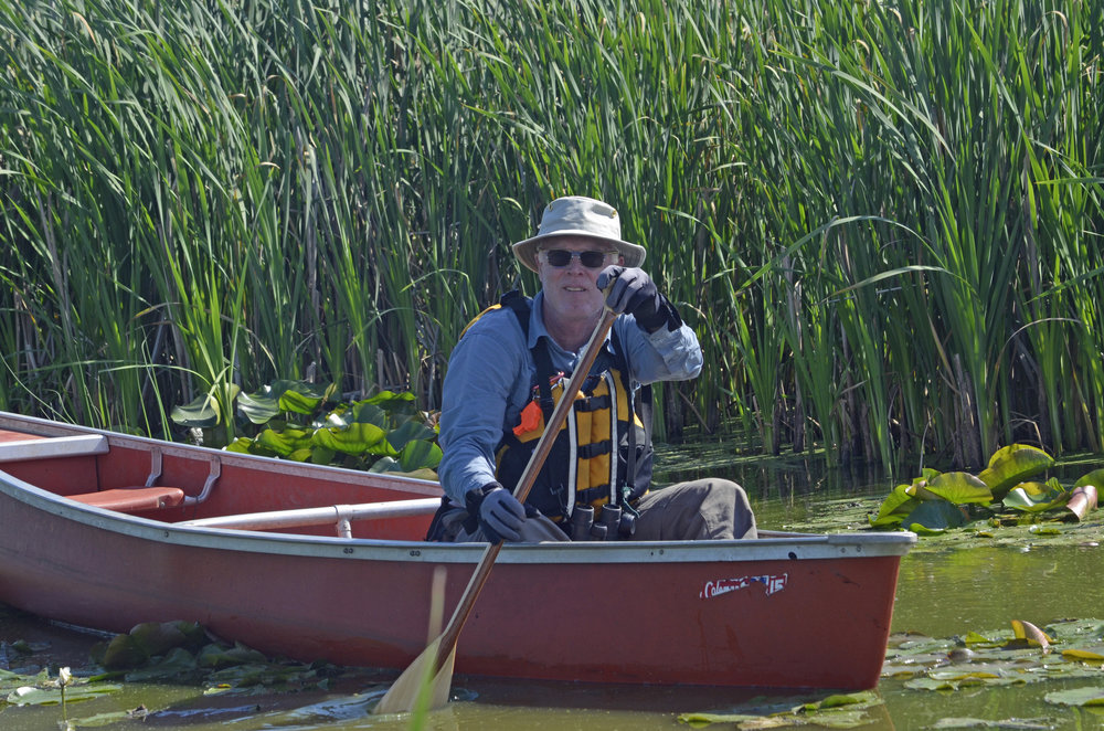 Brand Smith looking for gallinule nests. Note he is sitting in the front of the canoe, moving slowly to spot movement in the vegetation. Photo by Mark Martin