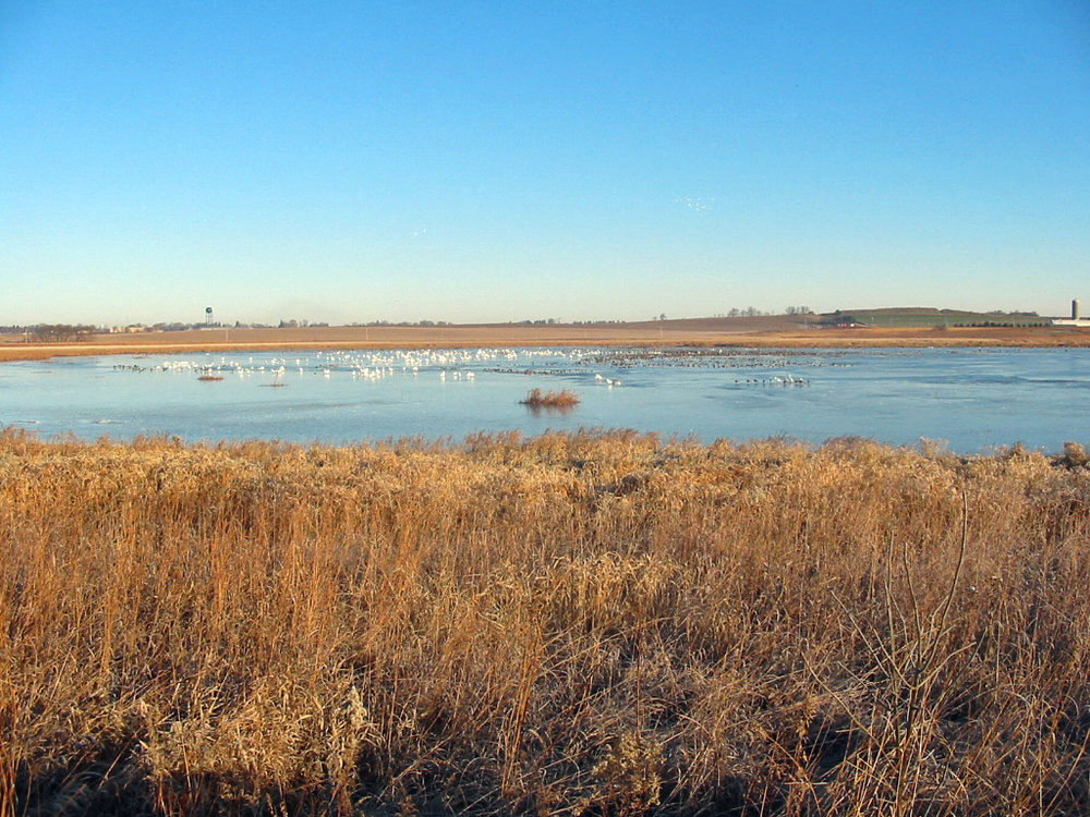 Goose Pond is a beautiful prairie pothole that supports loads of wildlife year round. Wetland scrapes near the pond will enhance the biodiversity on the sanctuary by providing additional wetland resources. Photo by Arlene Koziol.