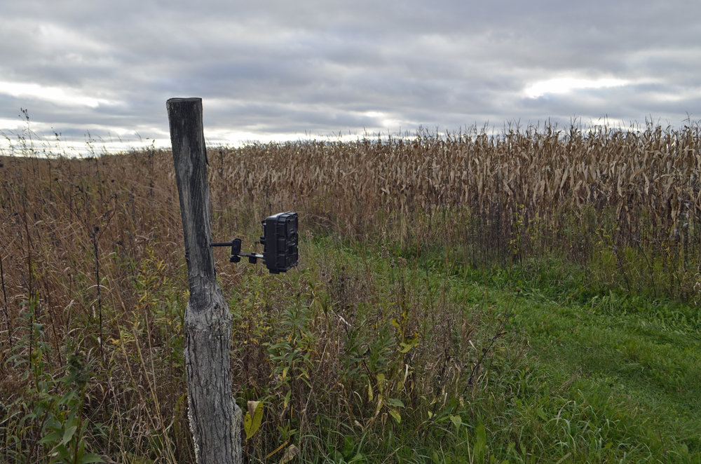 Project Snapshot Camera 01138, sited at Goose Pond Sanctuary. Photo by Mark Martin