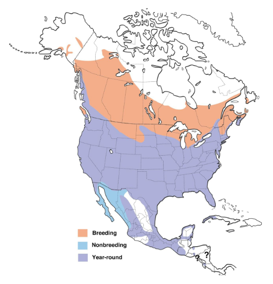 Red-winged blackbird range map. By Cornell Lab of Ornithology