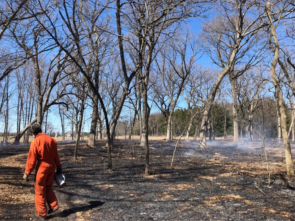 Prescribed burns in Hope Lake Bog result in patchy areas of unburned ground, perfect for germinating acorns. Photo by Drew Harry