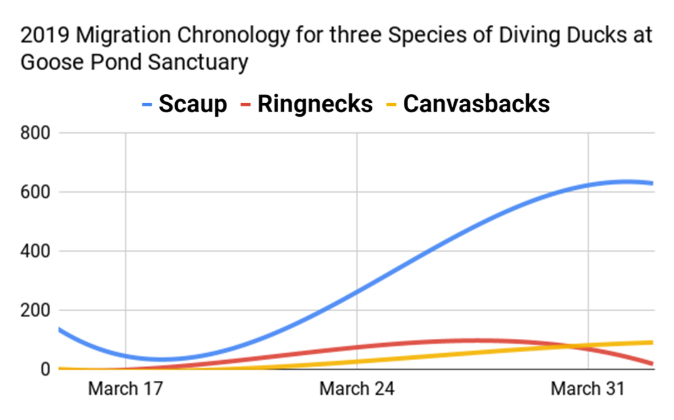 A graph showing the fluctuating presence of scaup, ringnecks, and canvasbacks at Goose Pond Sanctuary.